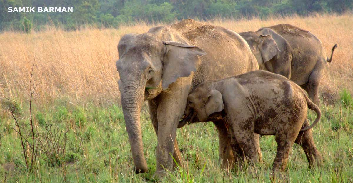 Mother Elephant with Calf