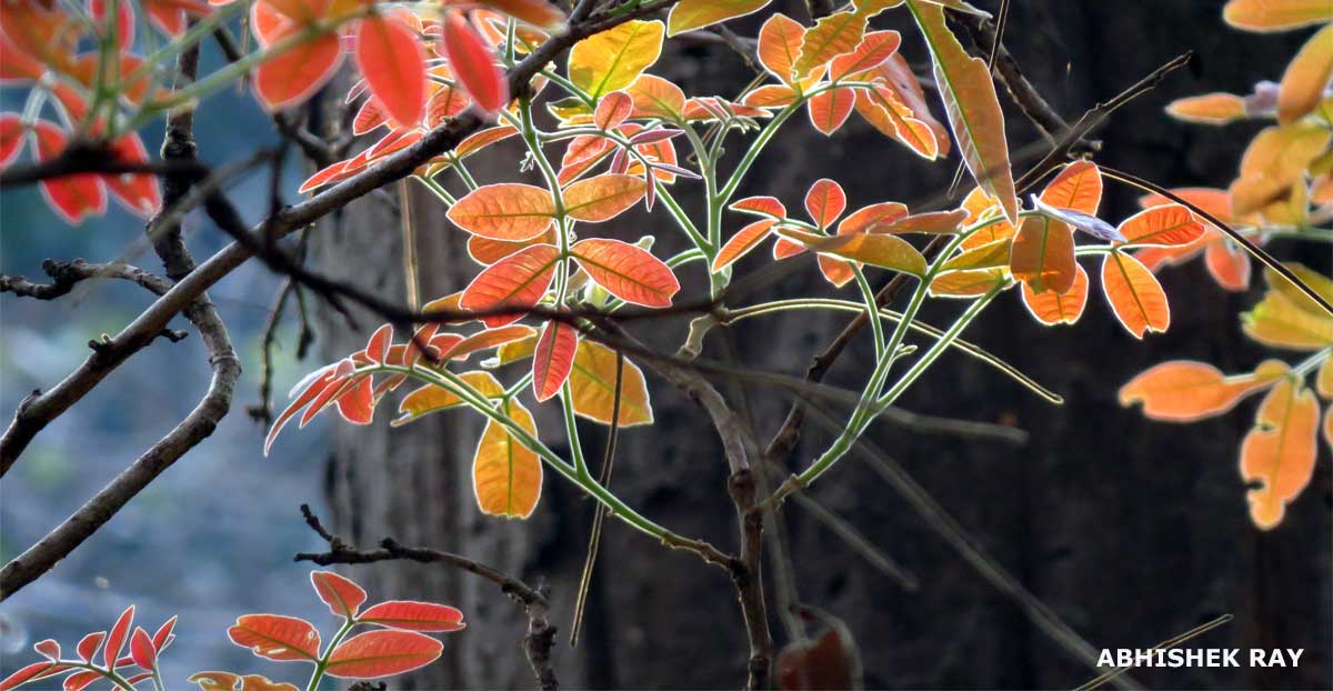 Amazing Leaves